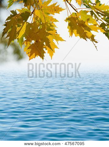 Autumn Leaf With Water
