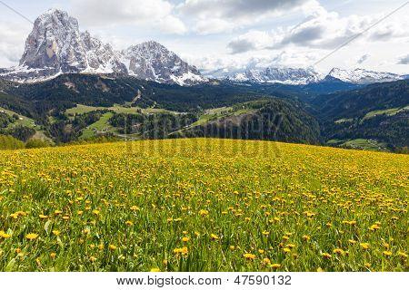 Alpine Meadow With Yellow Dandelions Flowers