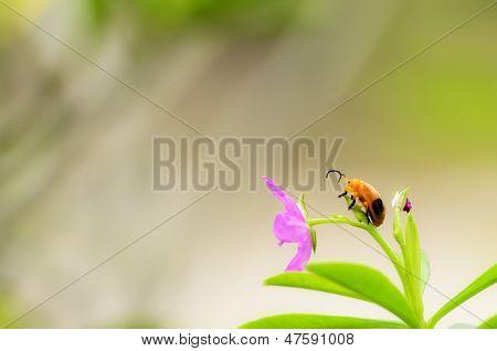 Ladybug Siting On Flower