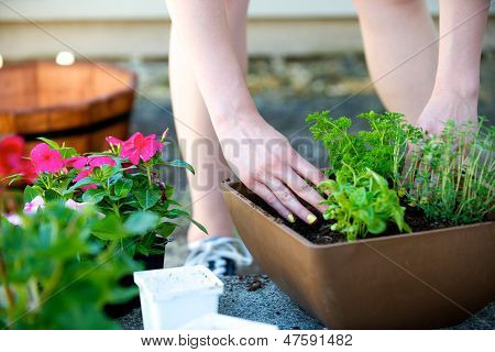 Hands Place Plant In Square Brown Planter