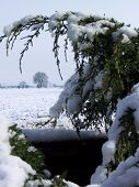 Rural View Through A Snowy Hedge poster