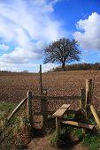 Lone Tree In Brown Field