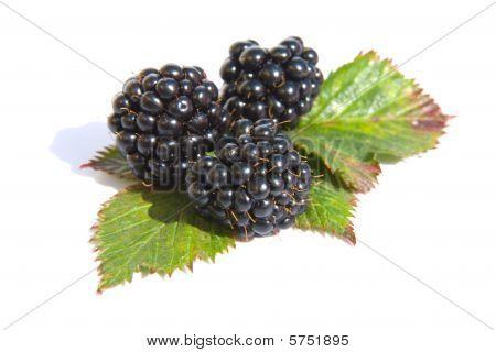 Blackberries Isolated On White