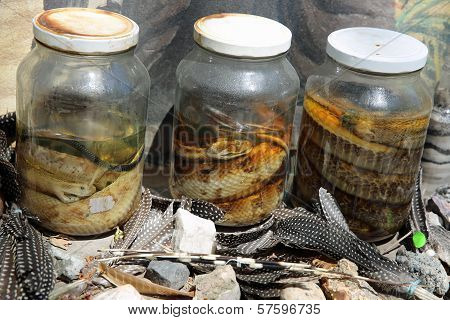 Pickled Snakes