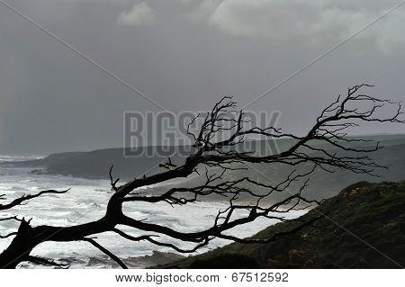 Skeleton In The Storm