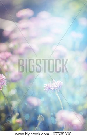 Wild  Flowers Blooming. Closeup Image. Soft Focus. Flower Background. Beautiful Flowers Made With Co