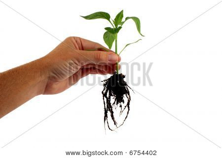 Plant Uprooted