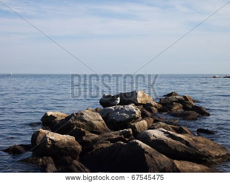 Seagull Rocks On Top Rocks Jettying Into The Ocean