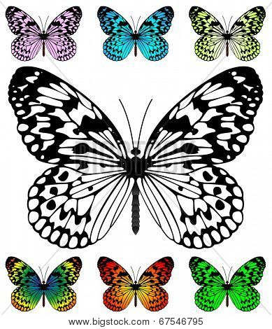Butterfly template with samples. Easy editable wings color. Paper Kite and Rice Paper butterfly, Idea Leuconoe species.