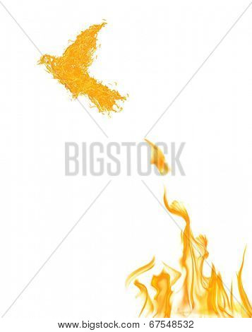 flame dove flying from yellow fire isolated on white background