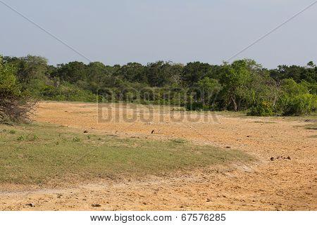 Safari In The Yala Nationalpark