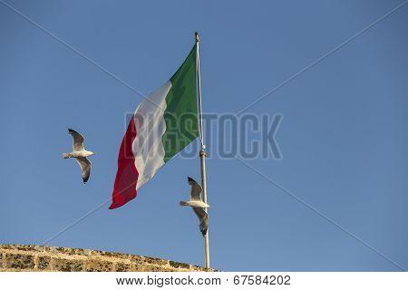 Seagulls Flying Near Italian Flag