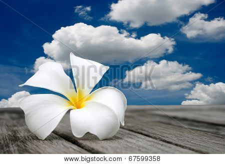 White Frangipani And Blue Sky