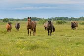 stock photo of hayfield  - Beautiful young horses on a scenic hayfield - JPG