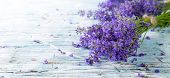 pic of lavender plant  - Lavender blossoms on wood - JPG