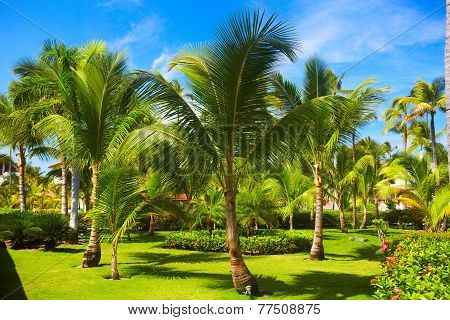 Tropical Palm.
