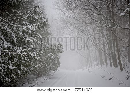 Snowy trees along slippery winter road covered in thick snow. Toronto, Canada.