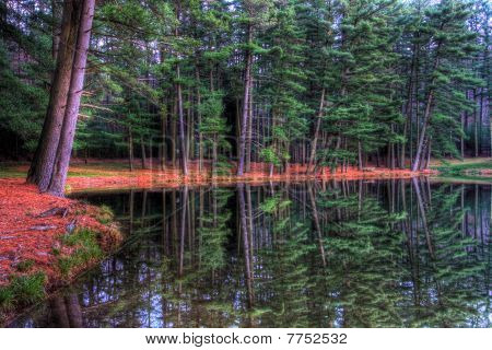 Evergreen Reflections