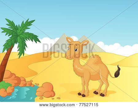Cartoon camel with desert background