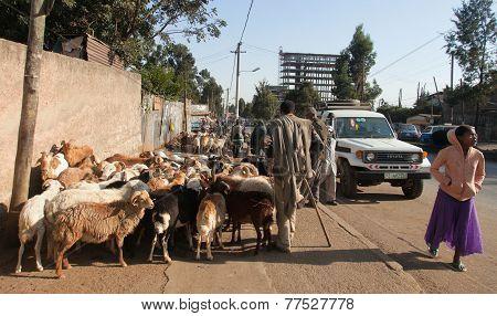 Market Animals In Ethiopia