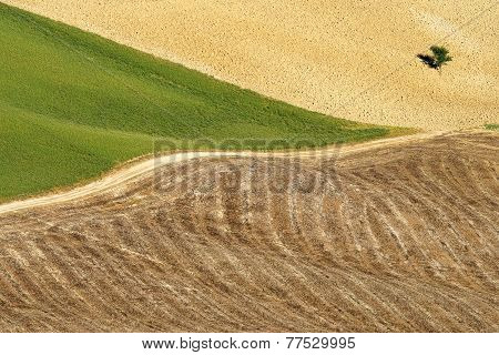 Areal View On Toscanian Landscape