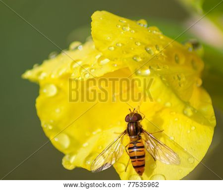 Flower With An Insect