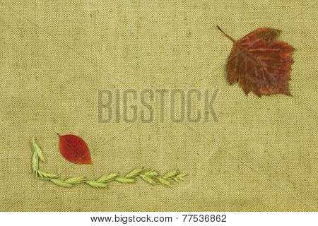 Dry Plants On Green Coarse Cloth.