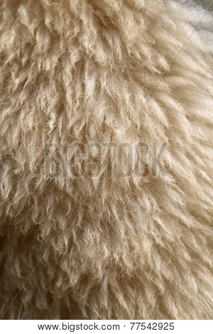 Photo Background Sheep Fur