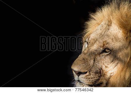 King Of Madikwe