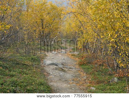 Trail on a hillside. Bushy yellow surrounding.