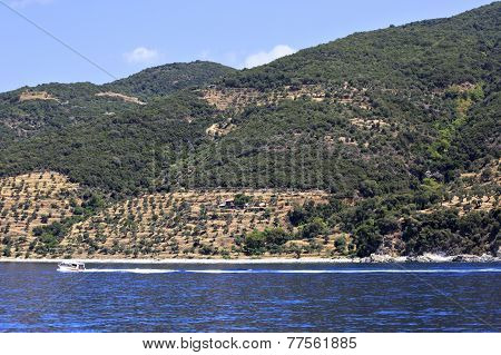 Olive groves on Holy Mount Athos.
