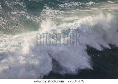 Bird and Mighty Waves of Atlantic Ocean, Ponta de Sagres, Portugal