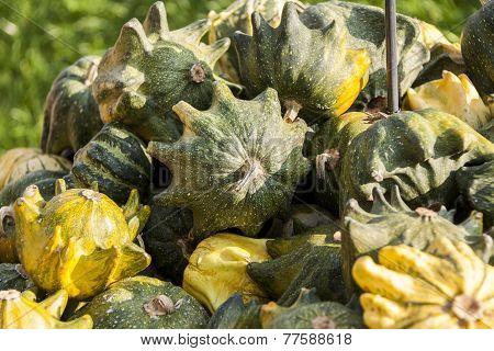Krönli Teufelskralle Devils Cucurbita Pumpkin Pumpkins From Autumn Harvest