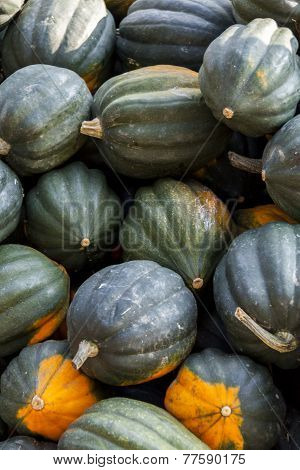 Mesa Queen Eichelkürbis Winterhorn Cucurbita Pumpkin Pumpkins From Autumn Harvest