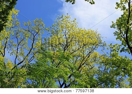 Green Foliage On A Background Of Blue Sky