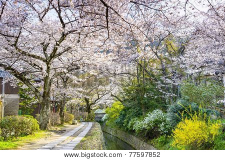 Kyoto, Japan at Philosopher's Way in the Springtime.