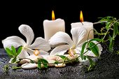 picture of tendril  - beautiful spa still life of white hibiscus twig with tendril passionflower and candles on zen basalt stones with drops closeup - JPG