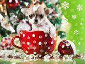 stock photo of christmas puppy  - puppy christmas - JPG