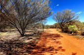 pic of oz  - Small orange country road in Australian outback - JPG