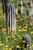 picture of veld  - Collection of cactus in the botanical garden - JPG