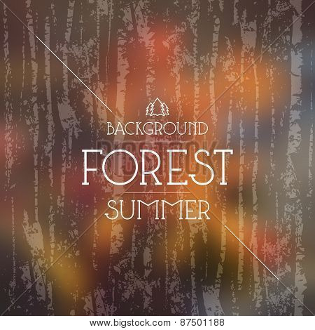 Summer Forest Background. Warm Colors