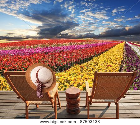 Two deck chairs on the platform are at the colorful flower fields. At one hanging elegant straw hat. Spring blooming buttercups grow stripes of different colors