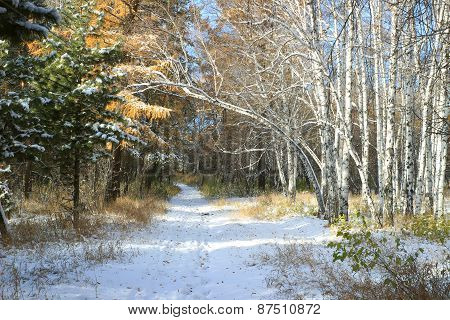 Late autumn landscape - first snow in mixed forest