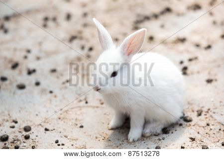 Funny Baby White Rabbit