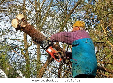 Senior Gardener, Wood Cutting
