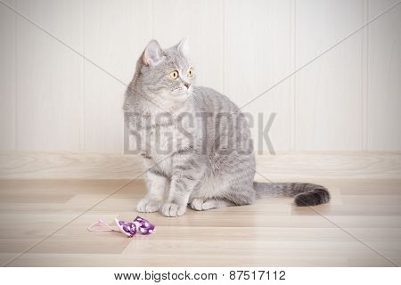 gray tabby cat sitting on the floor next to the bow, and looks away.