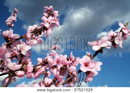 Bloomy Flowers In The Spring