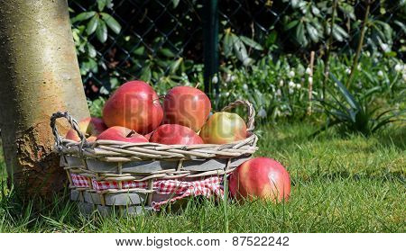 A basket of red apples