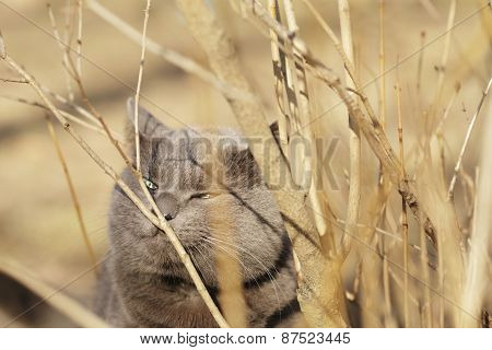 grey cat sniffs grass outdoors