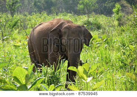 Little Elephant Hiding In Green Grass In Nature